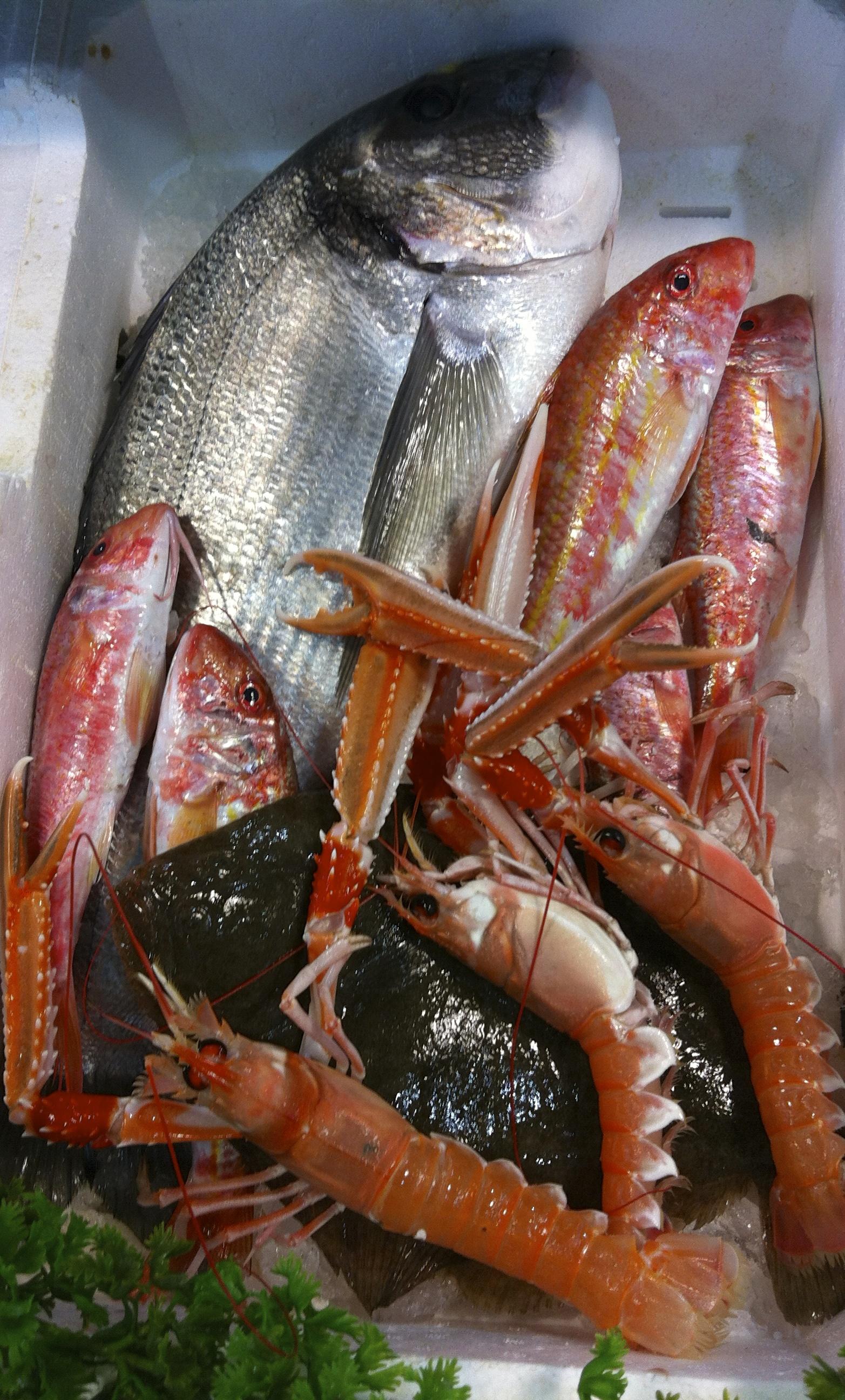 Dove potrei comprare del buon pesce ai castelli romani for Comprare pesci